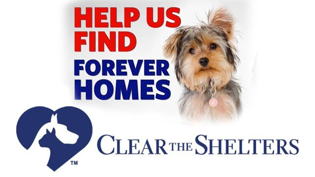 Adopt-A-Dog to Participate in Clear the Shelters on Aug 19