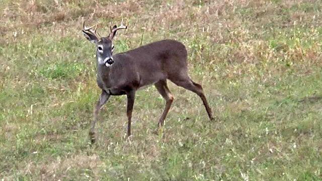 Deer season is big business in Texoma. (KTEN)