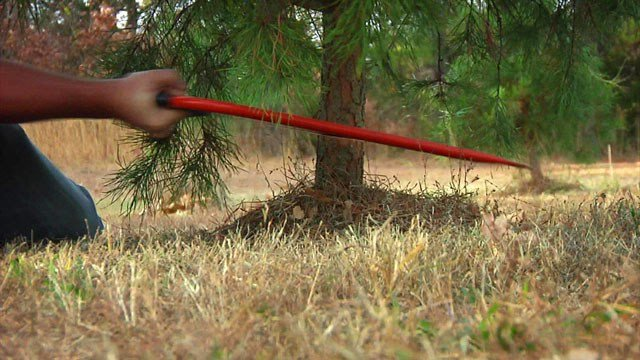 There's a nationwide shortage of fresh Christmas trees this season. (KTEN)
