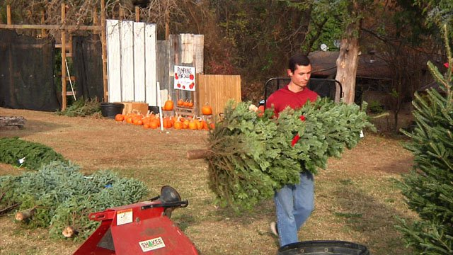 Elves Christmas Tree Farm in Denison says it has an adequate supply for the holiday season. (KTEN)