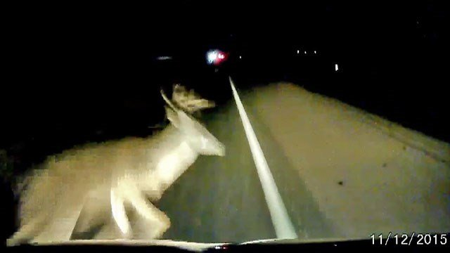 This buck ran in front of a car on a highway in Denton County, Texas, in December 2015. (KTEN)