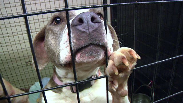Pets should not be left in the cold. (KTEN)