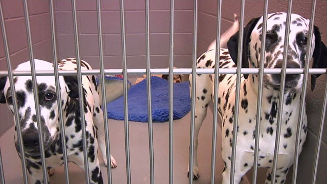 Canines are at risk for dog flu, but it hasn't reached Texoma  yet. (KTEN)