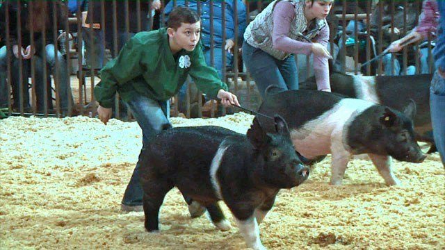 Caden Goodson shows his pig at the Choctaw Nation Livestock Show. (KTEN)