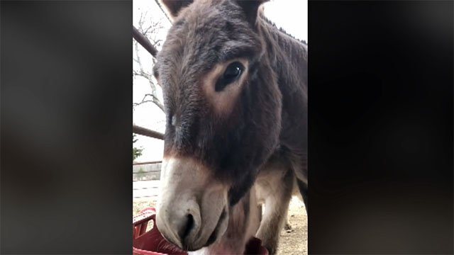 Karla Schmidt's donkey, Annie Oakley, was shot and killed in her pasture. (Facebook)