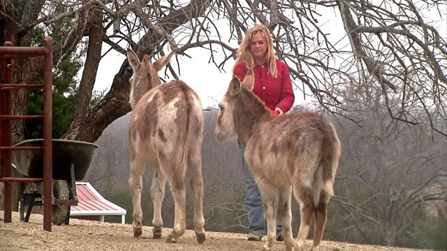 Two donkeys were orphaned after Annie Oakley was shot and killed. (KTEN)