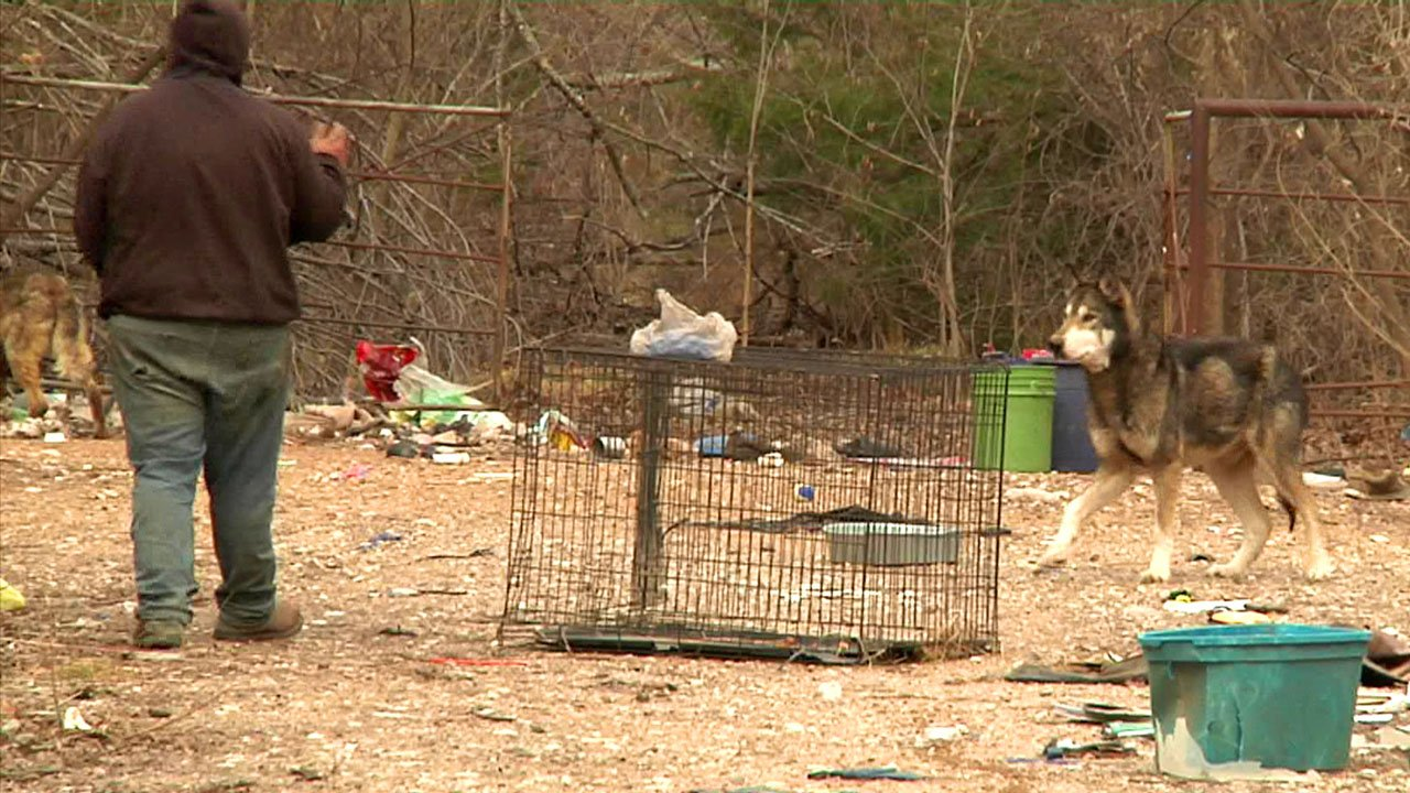 There may be as many as 30 dogs abandoned on a Hendrix property. (KTEN)
