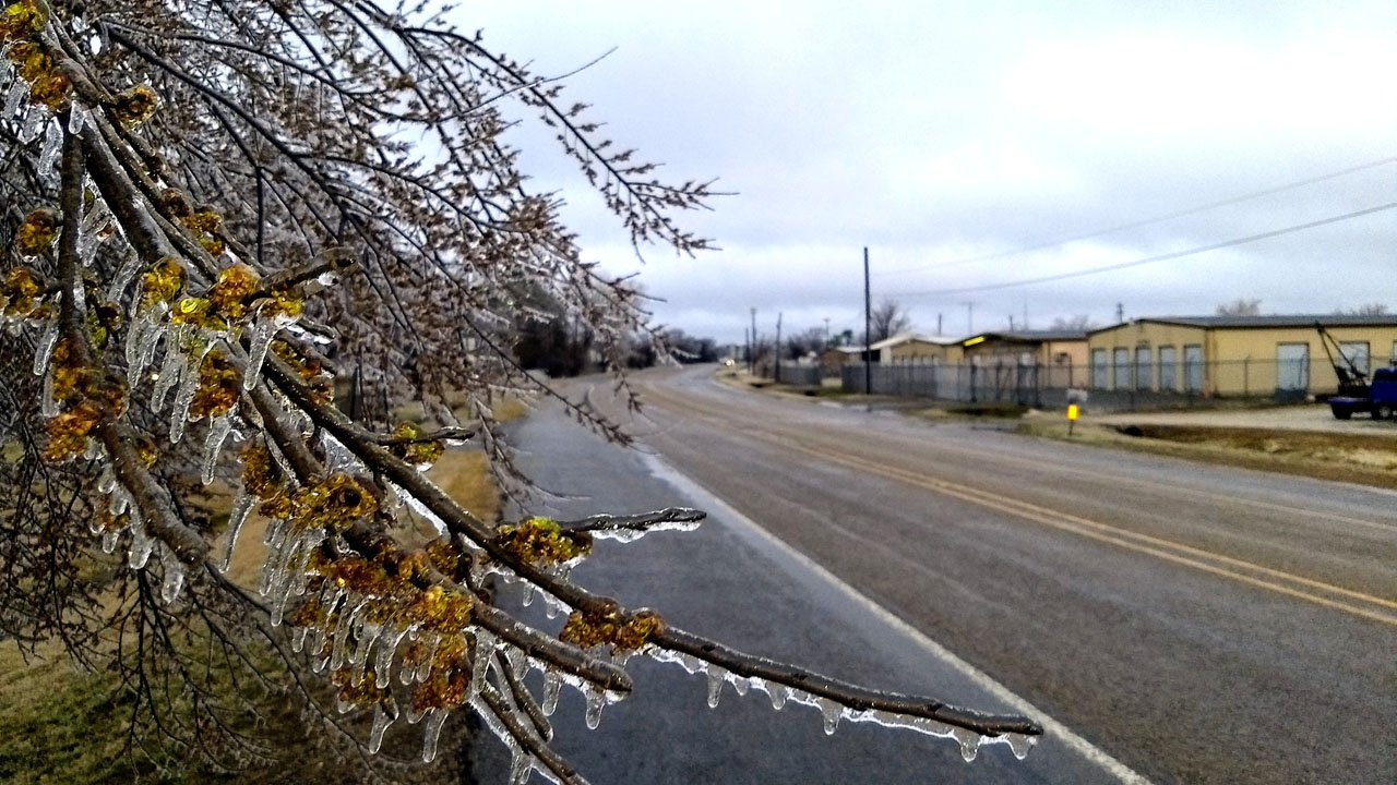 Ice weighed down tree branches along State Highway 56 in Whitesboro on Wednesday morning. (KTEN)