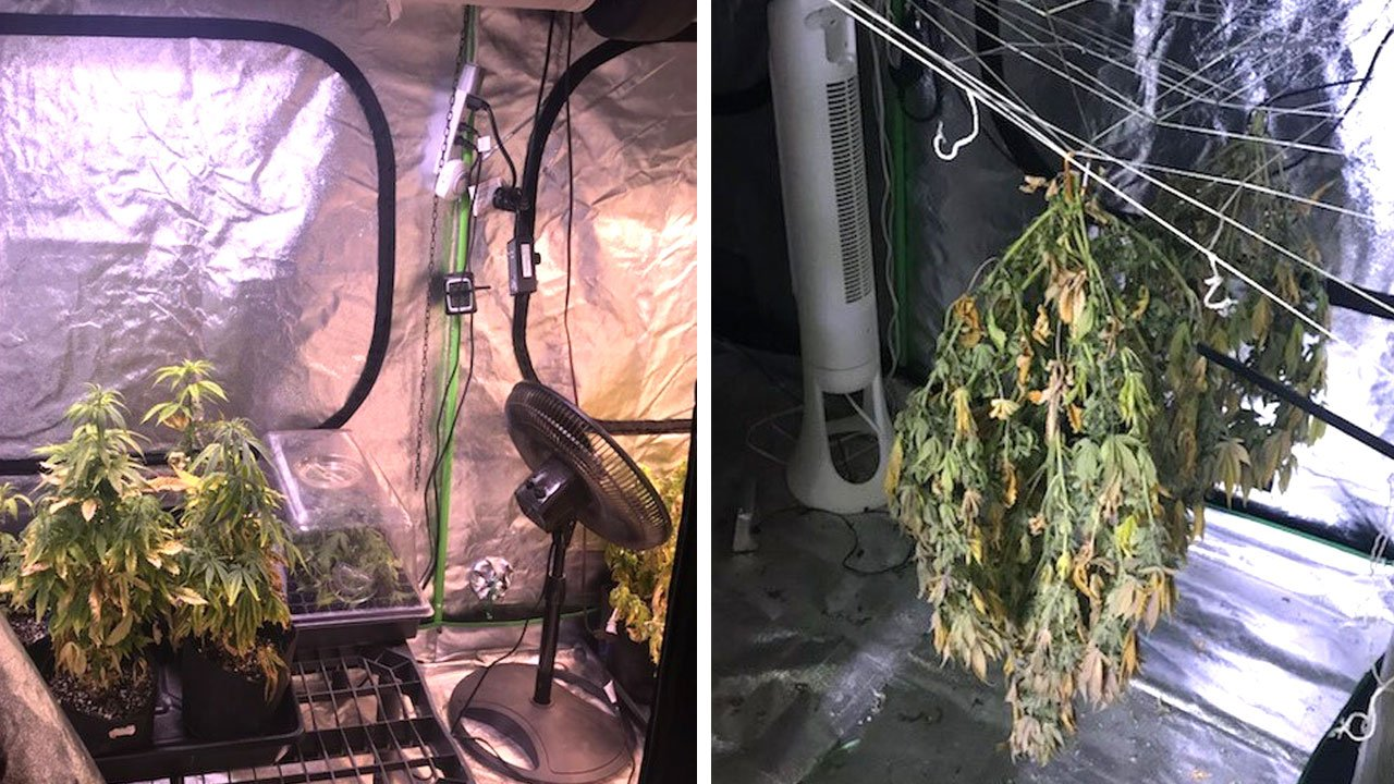 The Garvin County Sheriff's Office provided these photos of the marijuana growing operation at the home of Joshua and Kerri Bishop.