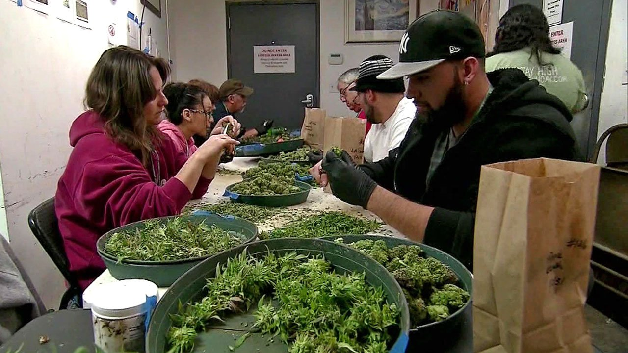 A marijuana processing facility in another state.