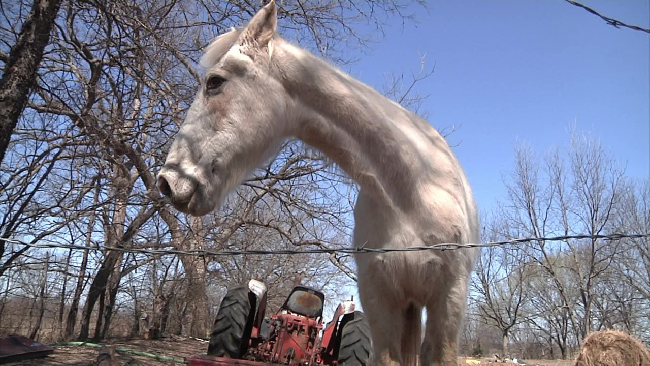 Two 11-year-olds were riding this horse when they said someone in a black pickup truck fired shots at them. (KTEN)