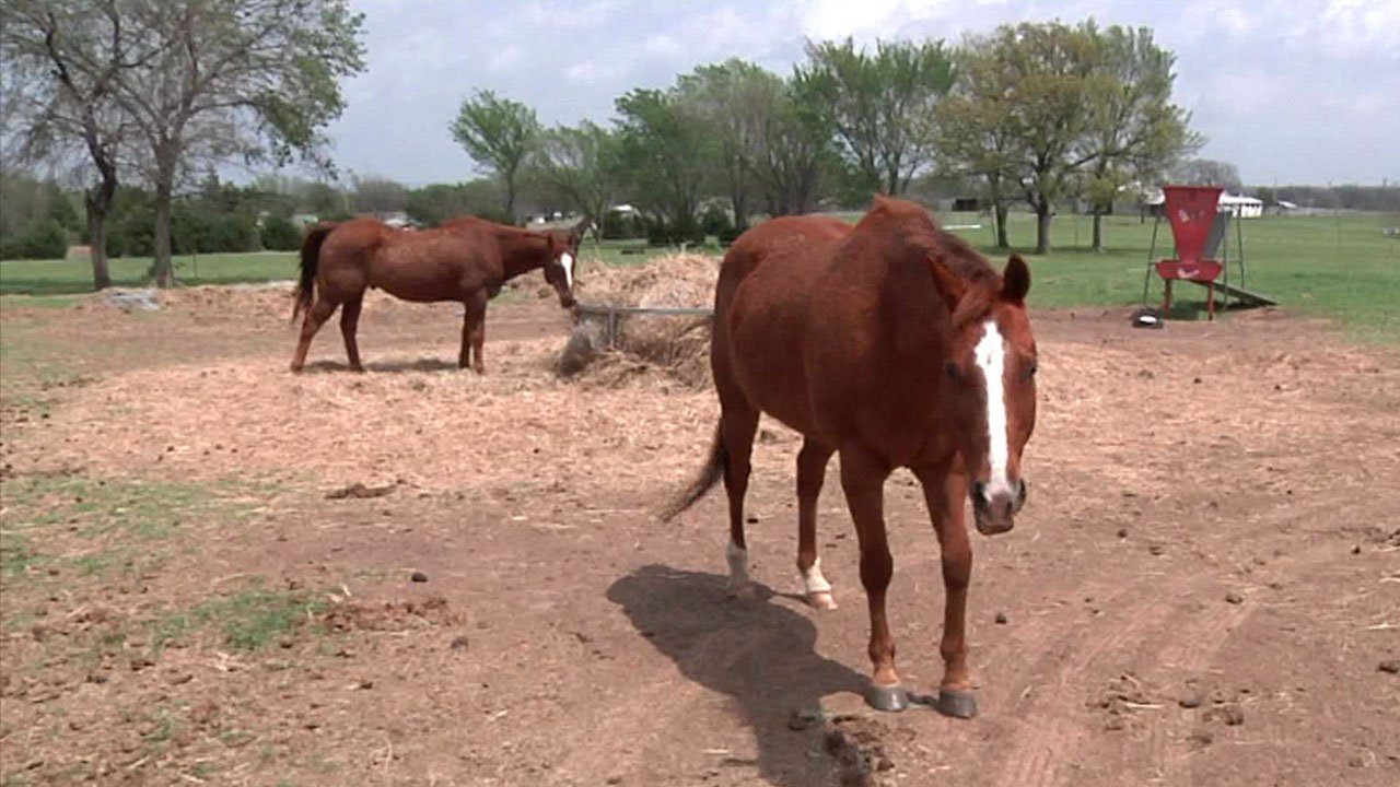 Hill Top Equine Therapy shows special needs children how to ride horses. (KTEN)