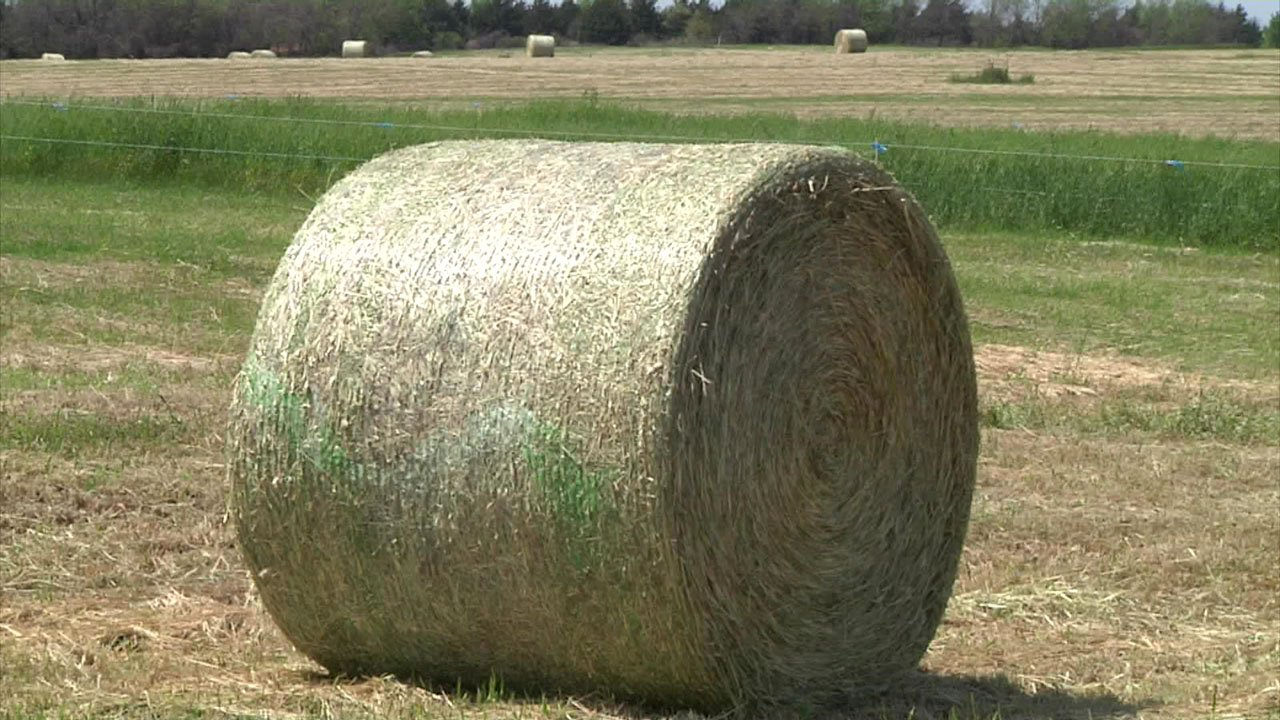 There's a quarantine on hay that could be infested with fire ants. (KTEN)