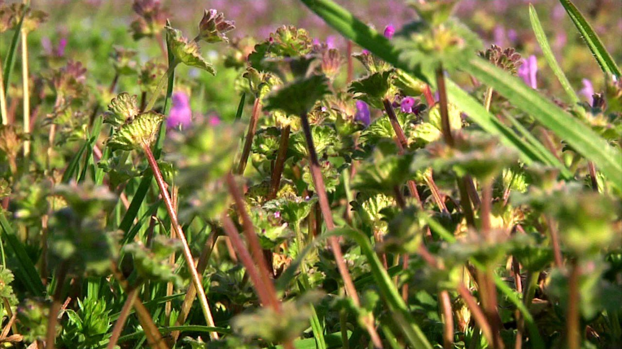 Blooming flowers and plants bring allergy woes to Texoma residents. (KTEN)