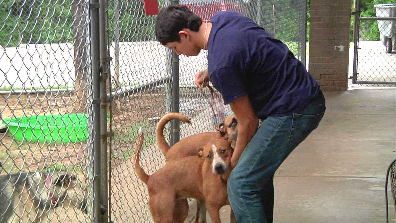 Ardmore's animal shelter is asking for donations and volunteers. (KTEN)