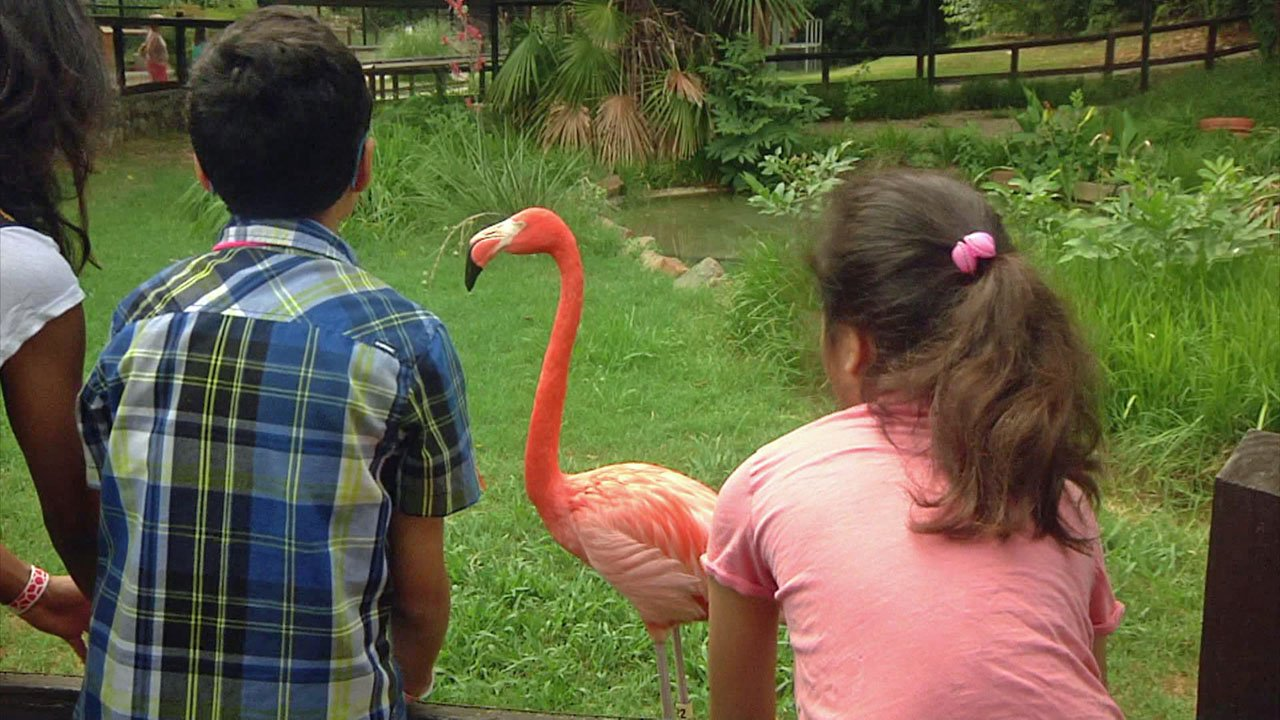 The Frank Buck Zoo in Gainesville has attractions for all ages. (KTEN)
