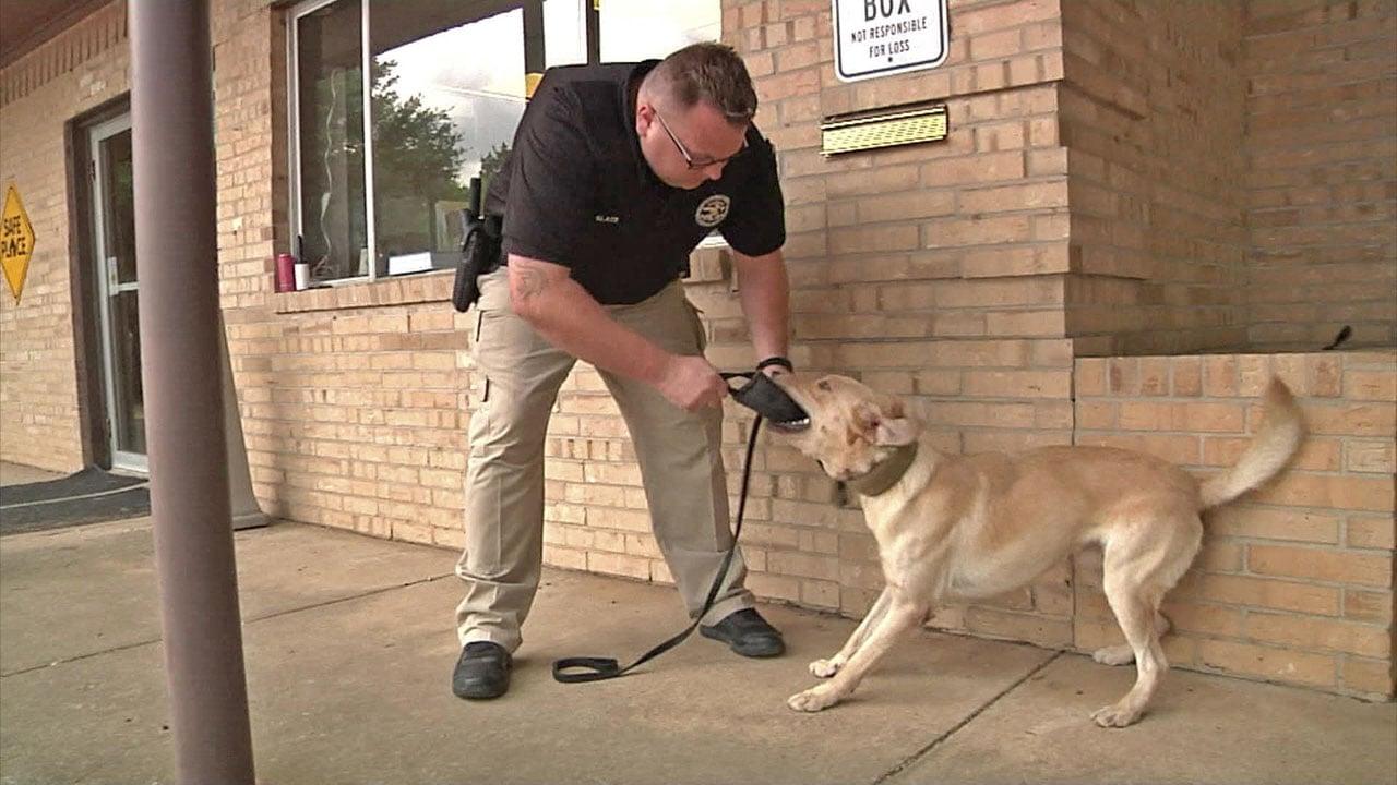 Officer Christopher Black with Tioga's new police dog, Duke. (KTEN)