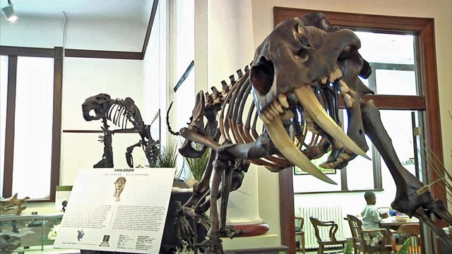 Dino Days at The Sherman Museum