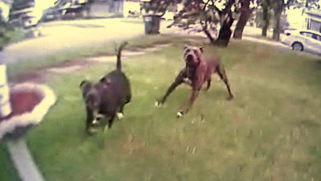 Dogs attack Healdton officer