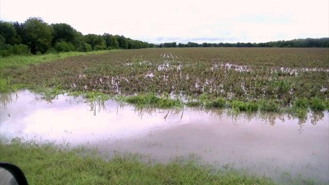Flooded crops in Fannin County