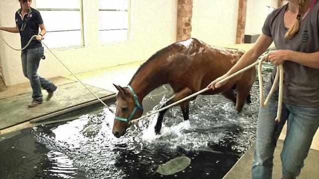 Horse gets aqua spa treatment