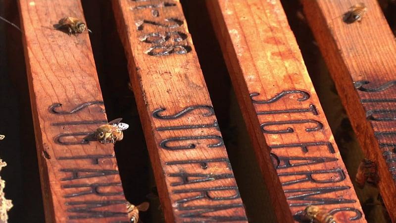 One of the 20 beehives at STG Farms in Sadler, Texas. (KTEN)