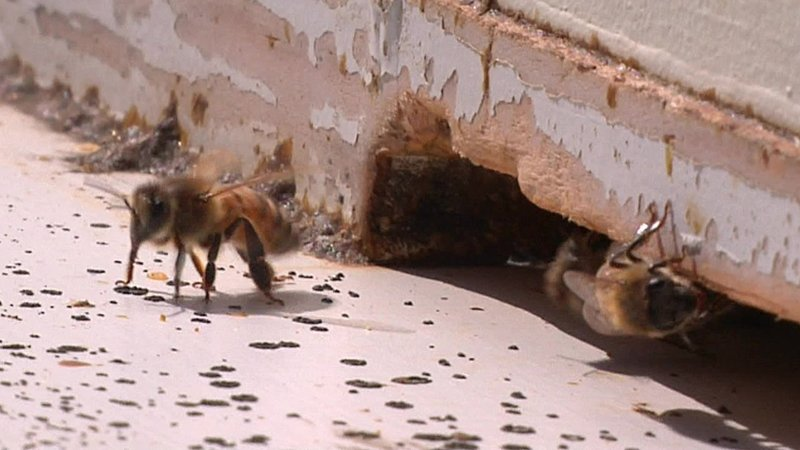 Bees provide a vital service in pollinating plants and flowers. (KTEN)