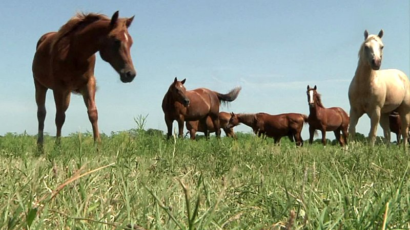 Horses that survived a weekend attack in Madill, Oklahoma. (KTEN)