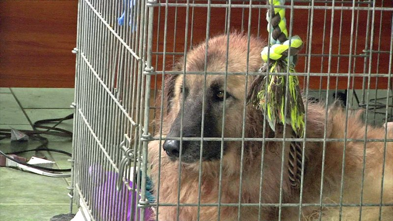The animal shelter in Ada has reached capacity. (KTEN)