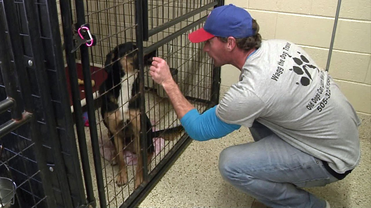 Dog trainer Matt Waggoner visits one of the dogs at the Denison Animal Welfare Group shelter. (KTEN)