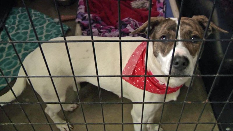 A proposed ordinance would require Denison pets to be spayed or neutered. (KTEN)