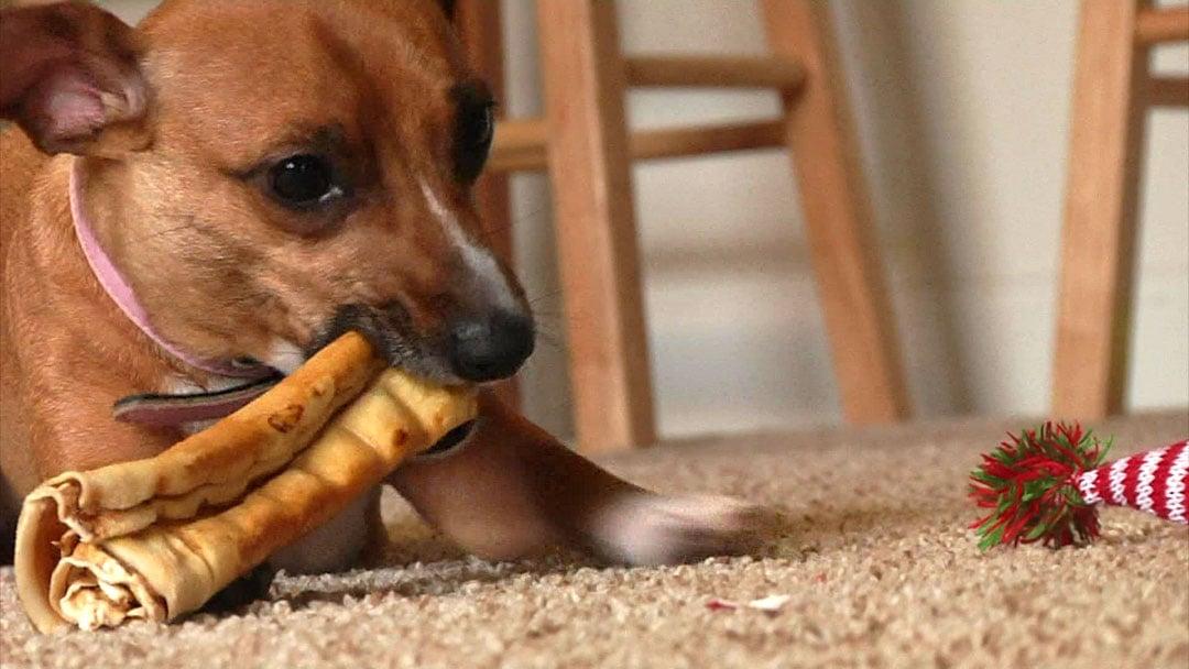 Ella's owner says a CBD oil pet snack helps calm her down. (KTEN)