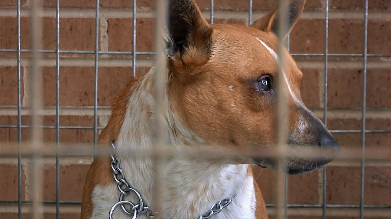 The Denison Animal Welfare Group is developing plans for a new shelter. (KTEN)