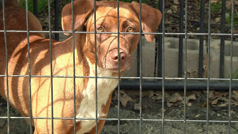 D.A.W.G. says a new shelter would reduce the need to transport pets to other facilities. (KTEN)