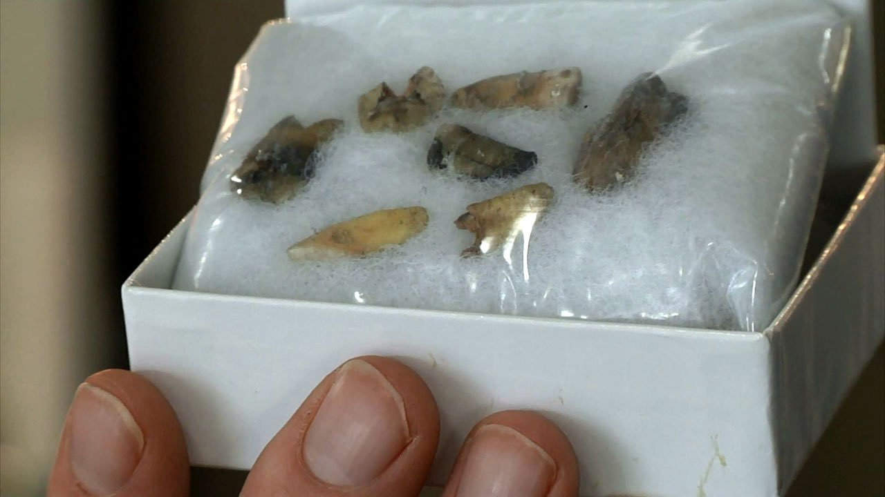 Teeth found in a downtown Denison loft could be a link to Doc Holliday. (KTEN)