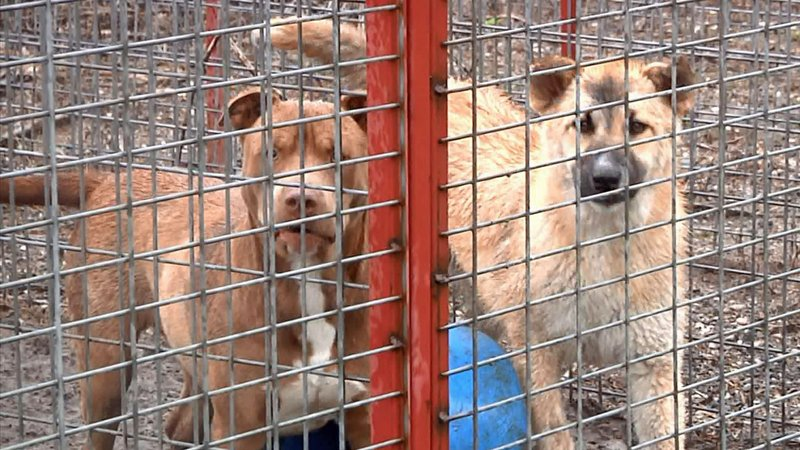 The Madill Animal Shelter has reached its capacity. (KTEN)