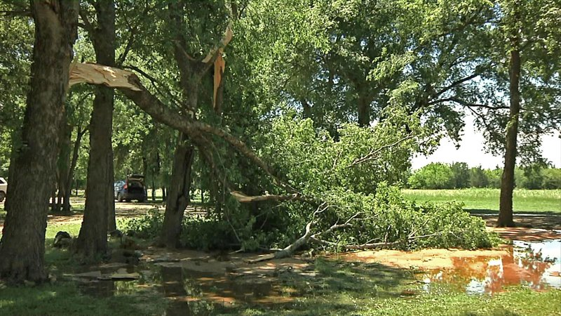 A violent storm toppled trees near Honey Grove, Texas, on May 29, 2019. (KTEN)