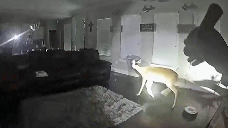 Lufkin police investigating a burglary call encountered a frightened deer. (Lufkin PD)