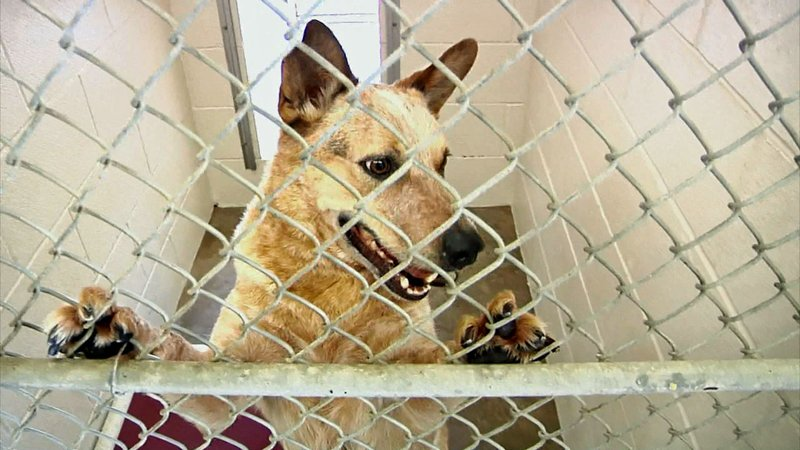 The Sherman Animal Shelter euthanizes about half of its intake. (KTEN)