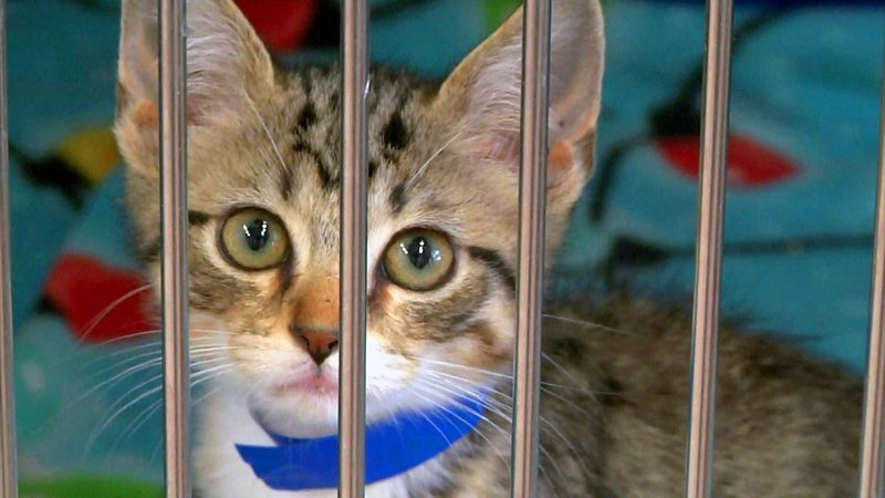 Ardmore Animal Care is offering cats for a $5 adoption fee on July 17, 2019. (KTEN)