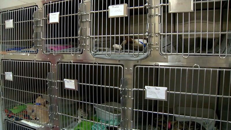Ardmore Animal Care said it has reached capacity. (KTEN)