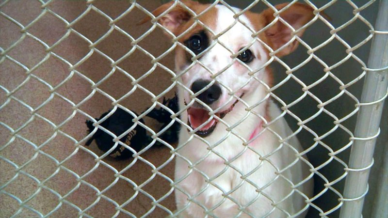 Ardmore Animal Care is offering discounted adoption fees on some pets. (KTEN)
