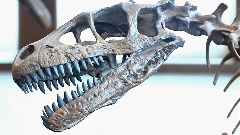 A dinosaur fossil on display at The Sherman Museum. (KTEN)