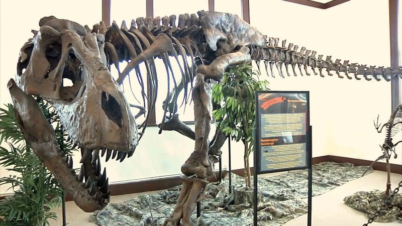 A Dino Days exhibit at The Sherman Museum. (KTEN)