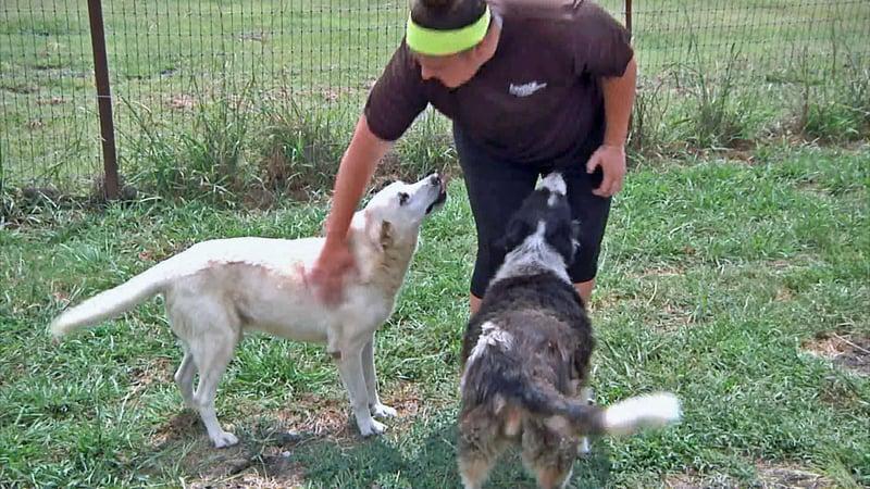 The Animal Refuge Foundation in Sherman cares for hundreds of dogs. (KTEN)