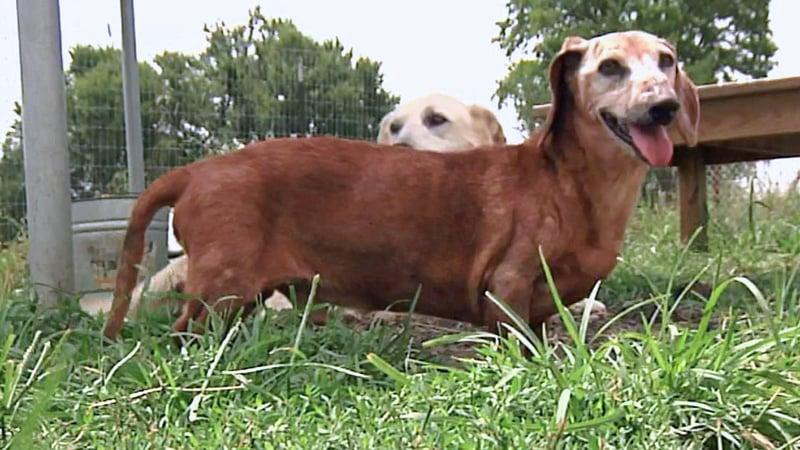 Older dogs at Animal Refuge Foundation can make great pets. (KTEN)