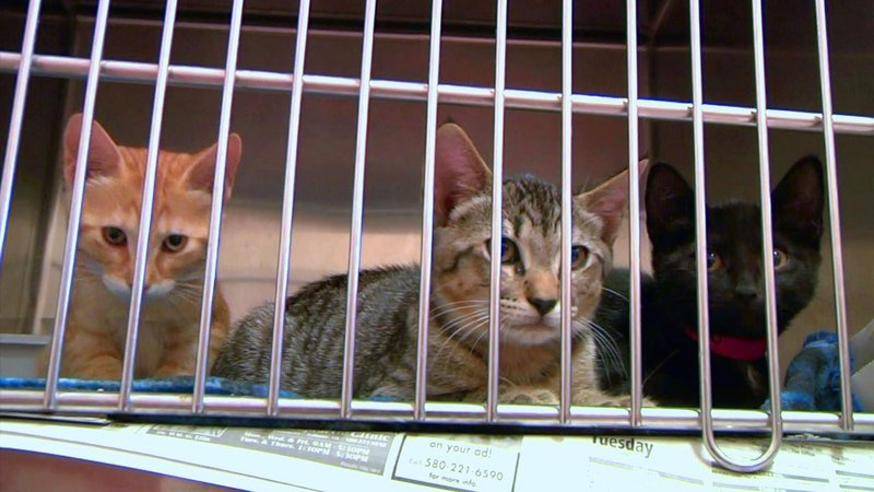 Ardmore Animal Care is offering pet adoptions for $5. (KTEN)