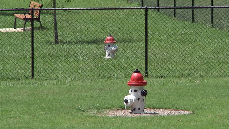 Dogs have been reported abandoned at Denison and Sherman dog parks. (KTEN)