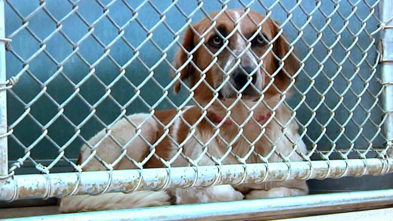 Ardmore Animal Care says its facility has quickly filled up with unwanted pets after a campaign to clear the shelter. (KTEN)