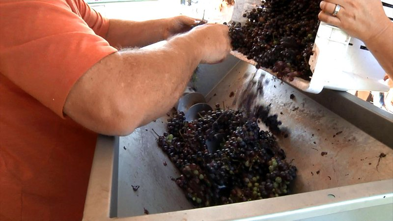 Grayson College students learn all aspects of winemaking. (KTEN)